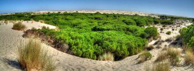 El Parque Nacional de Doñana  protagonista en la III Feria de Ecoturismo Doñana Natural Life - naturaleza