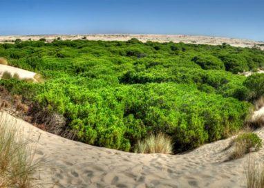 El Parque Nacional de Doñana  protagonista en la III Feria de Ecoturismo Doñana Natural Life