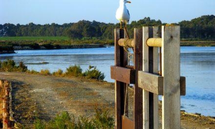 Programada una Gran limpieza del Parque Natural Bahía de Cádiz  para el 5 de junio