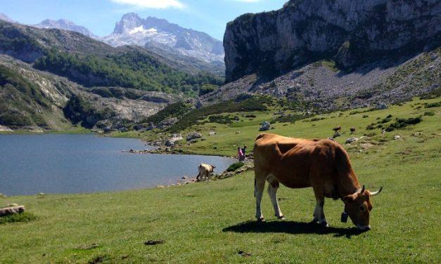 Se restringe el acceso con vehículos privados a los Lagos de Covadonga