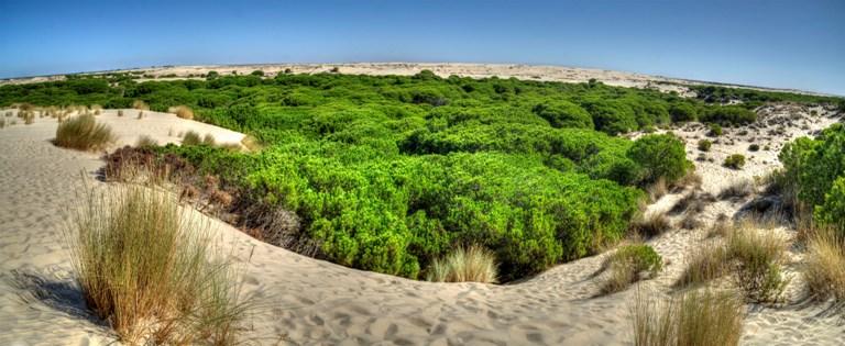 TS estima recurso que afecta favorablemente a Doñana