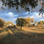 Ascenso notable del turismo rural de Extremadura en junio