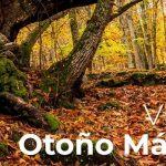 22ª edición del Otoño Mágico del Valle de Ambroz