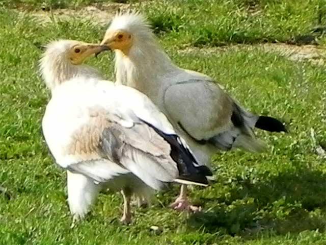 Observatorio de Aves de Mas de Bunyol