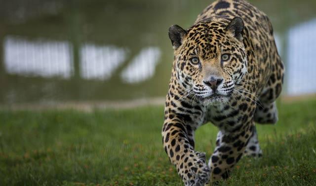 Parques para ver animales en semilibertad - Sendaviva, Navarra